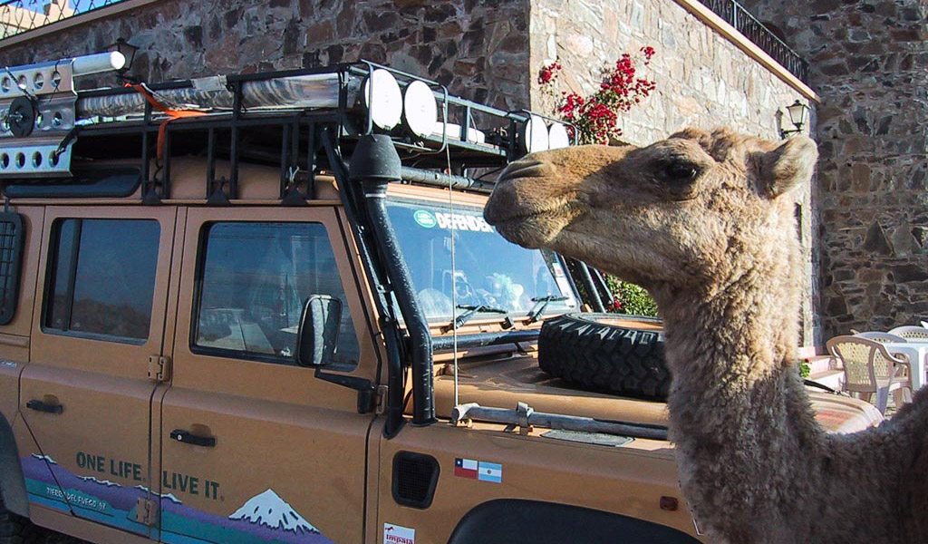 Camel and Camel Trophy Land Rover